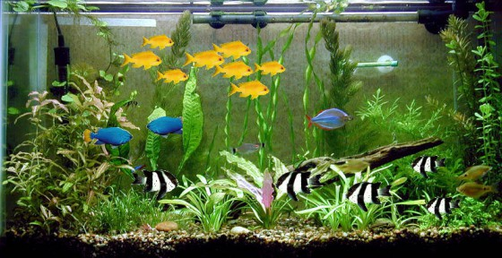 What does your shopping 'fishtank' look like?