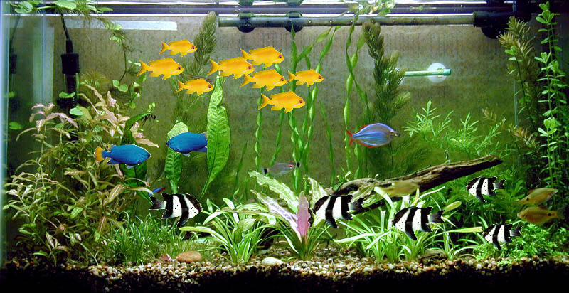 Pet care taking care your pets like dog cat fishes for How to take care of fish tank