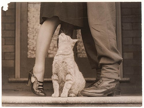 cat and couple